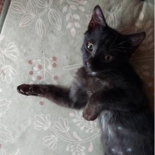 黒猫兄弟の里親募集 − 千葉県