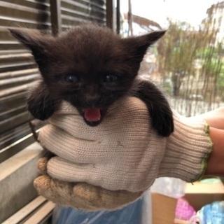 生後2ヶ月、野良猫の赤ちゃんです。