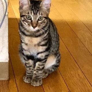 ご愛嬌りんちゃん♀美男子レオくんペア5ヶ月半 - 葛飾区