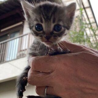 生後1ヶ月の5匹の仔猫(代理投稿)
