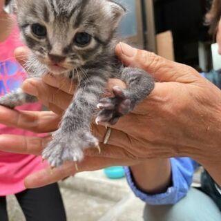 5匹の生後1ヶ月仔猫(代理投稿)