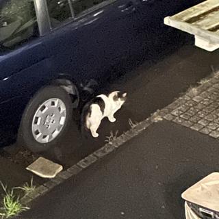 【9/25写真更新】迷い猫?