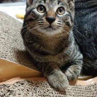 子猫😻💖(女の子)里親様募集!最後の1匹になりました!希望する方...