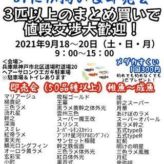 開催!9月18~20日、第4回ネバーめだか屋感謝祭!道場本店