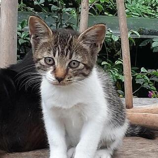 メス子猫3ヶ月くらい