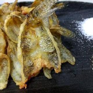 江戸前美味魚の釣り体験♪ 未初級者大募集♪ 9月24日開催!