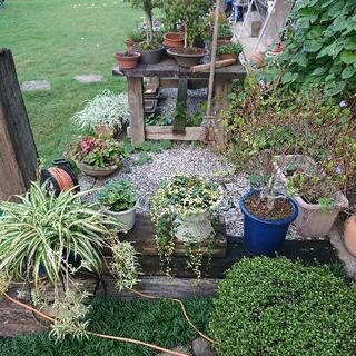 植物 植木 庭木 盆栽