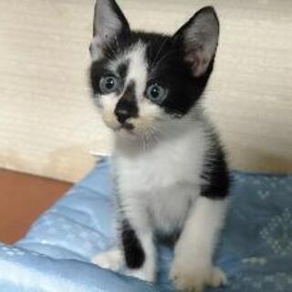 小猫 生後2ヶ月程度? 大牟田 元気で人懐っこいです。