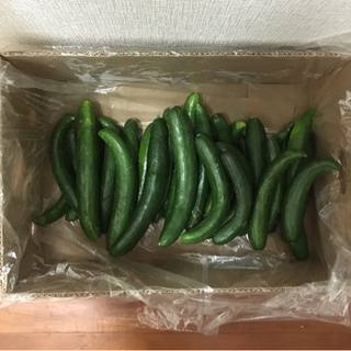 残りわずか! 不揃い きゅうり 野菜 5キロ