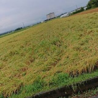 令和3年(2021年)産 近江米 コシヒカリ玄米30kg(10㎏...