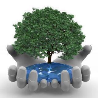 庭木の伐採お手伝いします