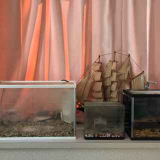 熱帯魚水槽セット