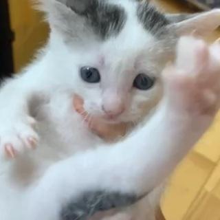 うし柄子猫ちゃん