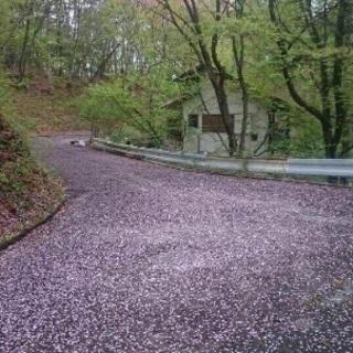 グランディ軽井沢ゴルフクラブエリア, 浅間山を臨む、桜の木が沢山...