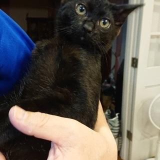 猫好きの方へ 子猫の里親を一緒に探してくれませんか?