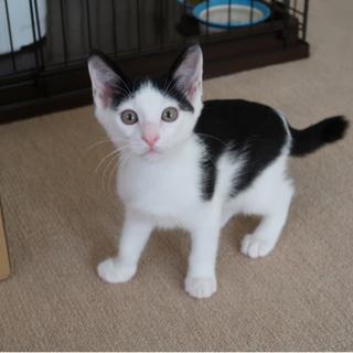 白黒のナギくん - 猫