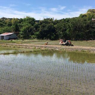 有機栽培!令和3年度産コシヒカリ新米!玄米30kg自家製