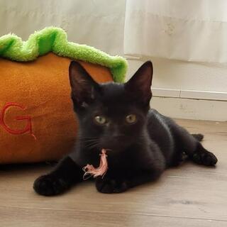 保護した野良猫の子猫たちを是非家族に迎えてください!