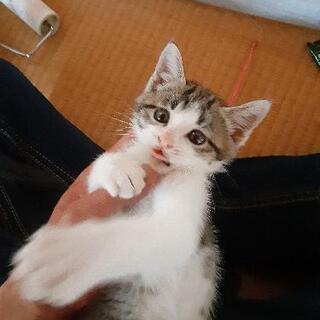 こんにちは。初めまして、9月4日川で保護致しました。性格はワンパクのような感じがします。自分の家でも猫飼っているので、ちょっと厳しいです。何方様飼って頂ける方、募集しております。生まれてから1ヶ月立ったか?2ヶ月にはなってないです。 − 山形県