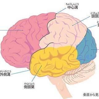 世の中に役立つ「脳トレーニング」を本業または副業にいかがですか!!