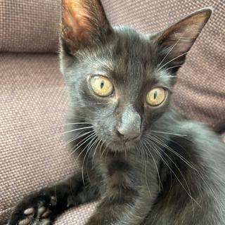 生後3ヶ月 黒猫です!