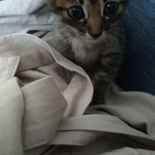 赤ちゃん猫の里親さんを募集しますฅ