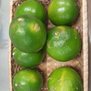 第二弾 小笠原 島レモン 1キロ 無農薬