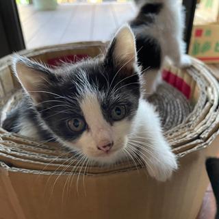 生後1ヶ月の子猫 4匹
