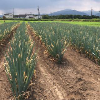 畑の除草作業
