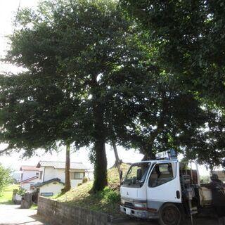 お宮の大木の枝落とし、福岡、ユンボ、格安