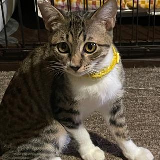 保護猫の親子 - 大月市