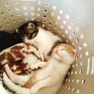 手塩にかけた箱入り兄弟猫2匹一緒に