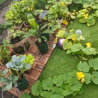 植物園スターターキット