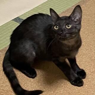 綺麗な黒猫なずなちゃん