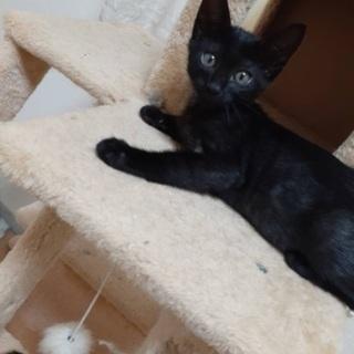 生後3ヶ月の黒猫ちゃんの画像