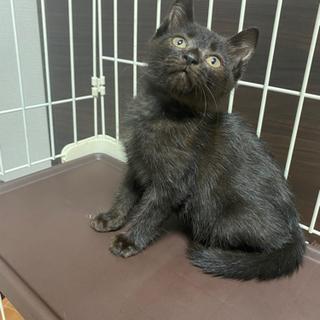 2ヶ月の子猫ちゃん クロちゃん 女の子