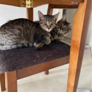 2匹の姉妹猫ちゃん