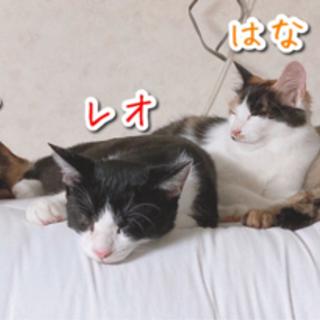野良子猫の里親募集(トライアル中) − 秋田県