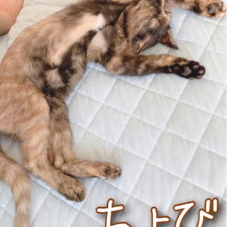 野良子猫の里親募集(トライアル中) - 湯沢市