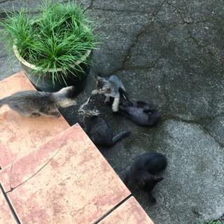 子猫達もらってください