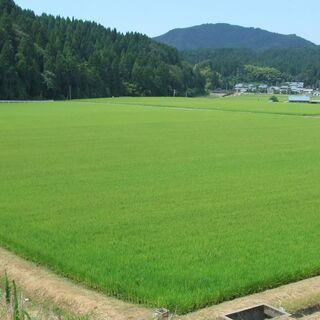 新米3年産 福井越前産 粒ぞろい玄米30キロ¥7980税込