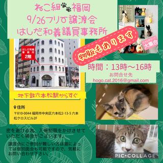 【毎週日曜譲渡会】少しビビリな三毛猫 − 福岡県