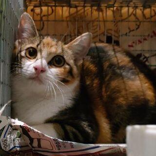 【5月生まれ】ミケ猫女の子