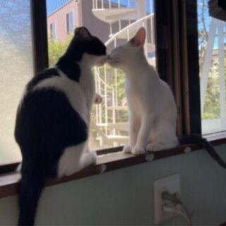 【猫慣れしてる方を探してます】 - 猫