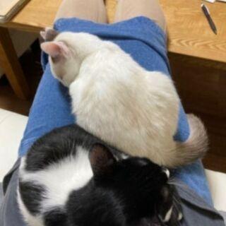 【猫慣れしてる方を探してます】 − 静岡県