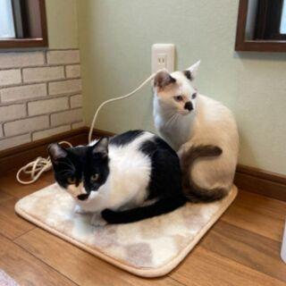 【猫慣れしてる方を探してます】 - 里親募集