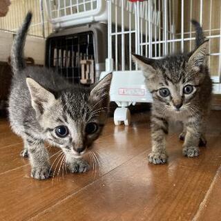 キジ猫三姉妹 里親様決まりました - 福津市