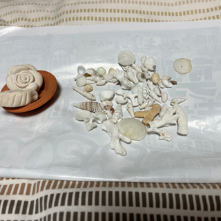 イミフな組み合わせ 貝がらとサンゴ 素焼きの置き物?