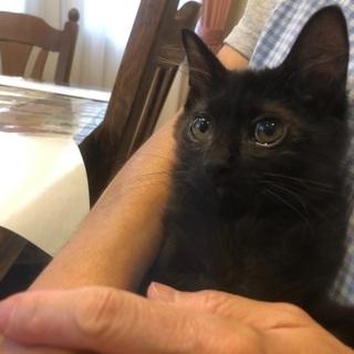奇跡の子!5ヶ月黒猫兄弟!