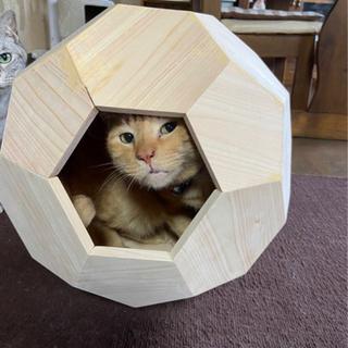 サッカーボール型   猫小屋⚽️
